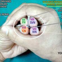 Fül- orr- gégészeti anatómiai modellek - a kezünkkel
