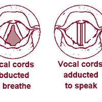 A hangszalagok elülső találkozási pontjának jelentősége hangszalagrák esetén
