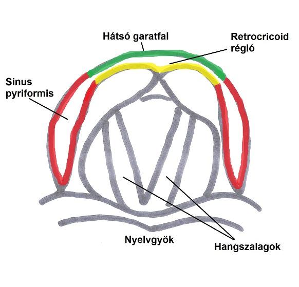 hypopharynx regions felirat kisebb.jpg