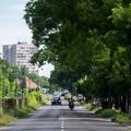 Szentendrei úti fák