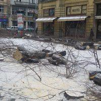 Semmelweis utca – fakivágási példatár