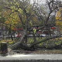 Requiem az Etele úti fákért