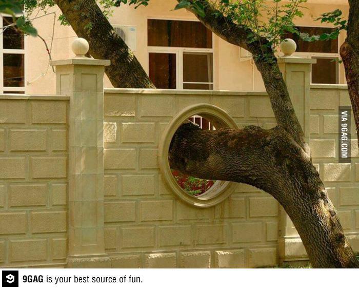 kerítésen átnövő fa.jpg