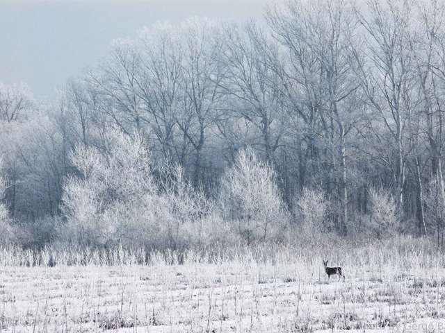 Fotócsütörtök - Winter Wonderland