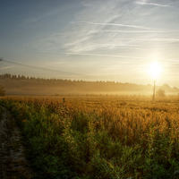 Fotócsütörtök - Morning Light