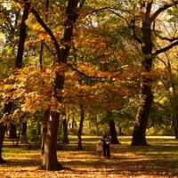 Fotócsütörtök - Őszi séta az újszegedi Ligetben...