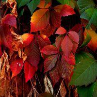 Fotócsütörtök - Őszi színek