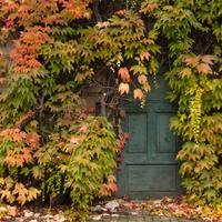 Fotócsütörtök - Titkok kertje