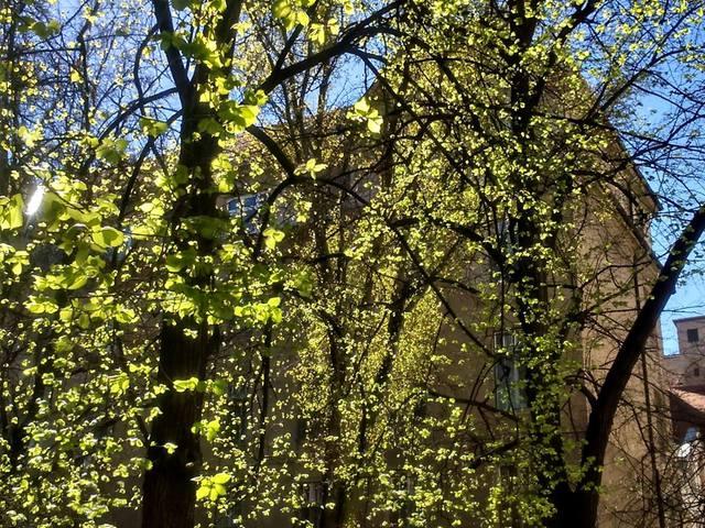 Fotócsütörtök - Tavasz a szomszédban