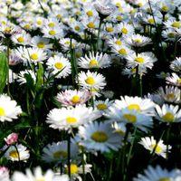 Fotócsütörtök - Örök tavaszban járnék...