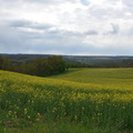 Fotócsütörtök - Tavaszi séta