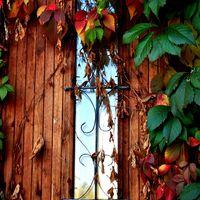 Fotócsütörtök - Itt van az ősz, itt van újra...
