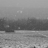 Fotócsütörtök - Egyedül a hóesésben