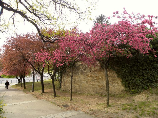 Fotócsütörtök - Tavasz, színek, illatok, pillanatok