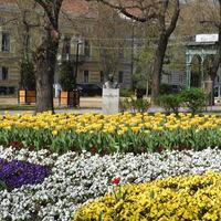 Virágos Fehérvár