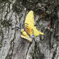 Törött szárnyú pillangó a Béke téri parkban