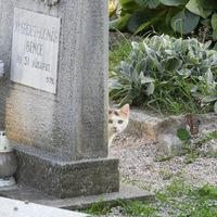 Egy tafofil macskával találkoztam a Kálvária temetőben