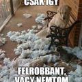 Minden kutya...