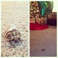 Hogy ne veszítsd el a teknősöd...