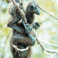 10 érdekes tény az állatvilágból