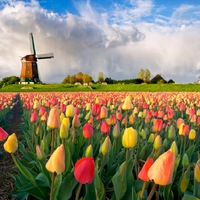 Keukenhof, a világ legnagyobb virágoskertje