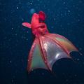 5 különös mélytengeri élőlény