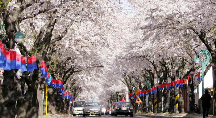 Jeju_cherry_jeonnongro_L1.jpg