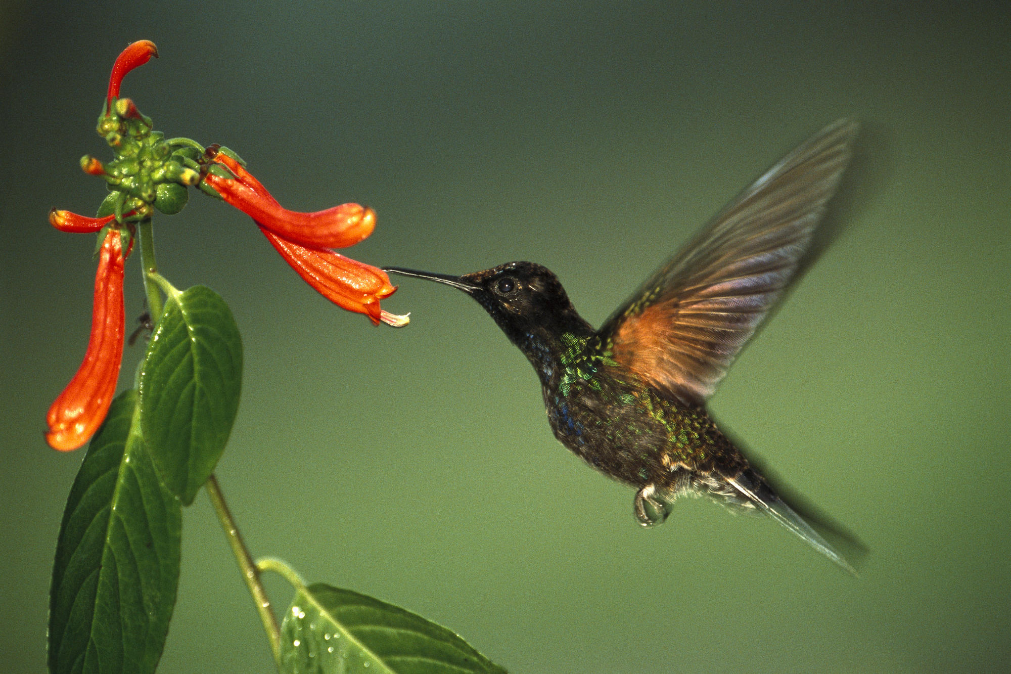 kolibri_1101018_2357.jpg