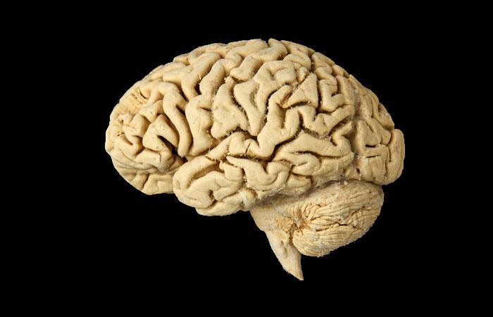 mxcp33-human-brain.jpg