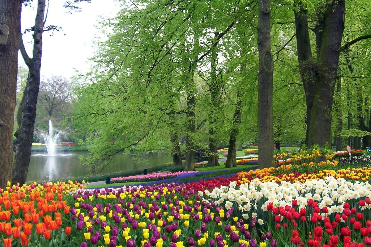 mxcpkeukenhof-gardens-early-morning.jpg