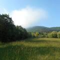 Üdvözlünk az Erdőjáró blogon!