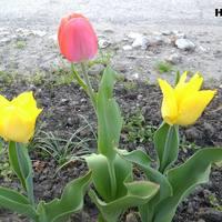 Kerti növények tavasszal 2.