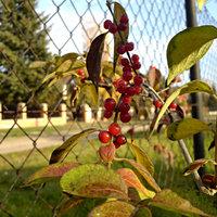 Növények ősszel