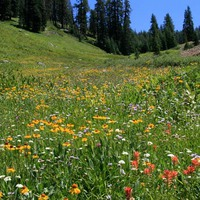 Ehető vadnövények 4. rész - Egynyári vagy egyéves növények