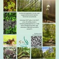Fotópályázat a tavaszi és a nyári erdőről