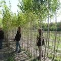 Mivel foglalkozik az erdész? 2. rész - A csemetekert
