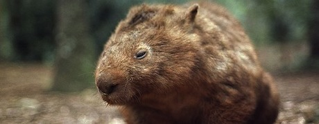 common-wombat_506_600x450.jpg