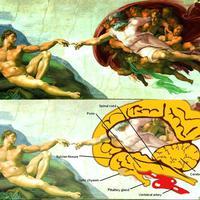 Istenek az agyban születnek. Michelangelo szerint is.