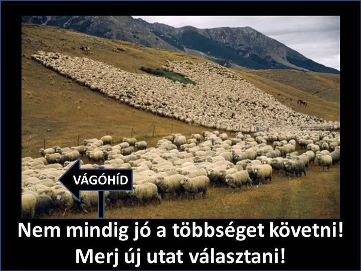 birkak_vagohid_1346946241.jpg_720x540