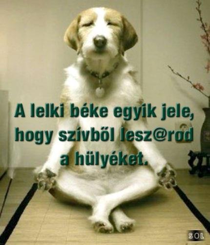 lelki_beke_1377757500.jpg_430x500