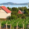 Hatalmas növekedés a Balatonon – mindenki nyaralót vásárol