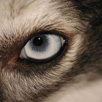 Tudtad ezt a kutyákról?