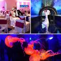 Esküvő egy akváriumban