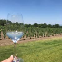 Chardonnay-k vonzásában