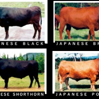 A világ legjobb marhahúsai