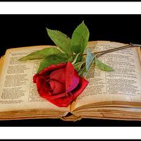 A Könyv és a Szerzői Jog Világnapja