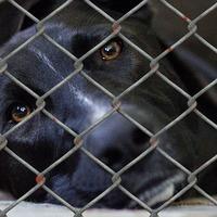 Tüntetés Fülöp miatt az állatkínzás ellen - lássuk meg az állattartás pozitívumait!