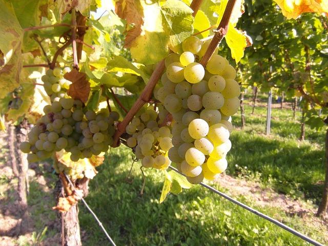 grapes-259862_640.jpg