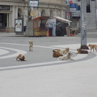 11 kihagyhatatlan látnivaló Szkopjéban