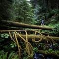 Őserdők Európában: térképen a különleges menekülési zónák